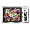 Daisy Mix Stamp